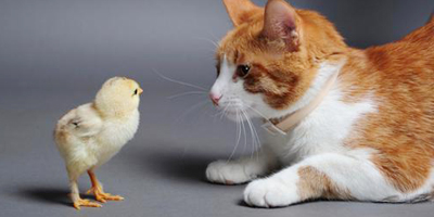 Chick and Cat